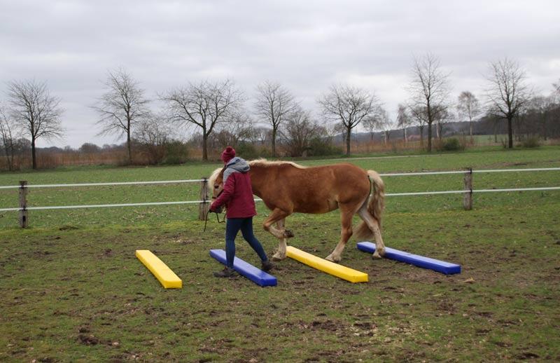 Bodenarbeit Pferd Vertrauen Fahrstall Goldbusch