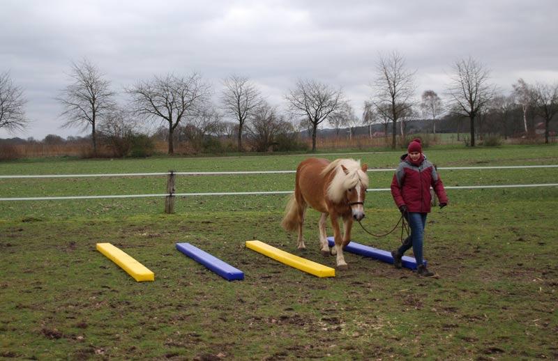 Bodenarbeit Pferd Fahrstall Goldbusch