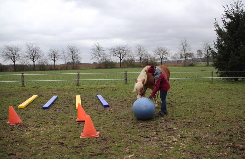 Bodenarbeit Pferde Umgang Fahren Reiten