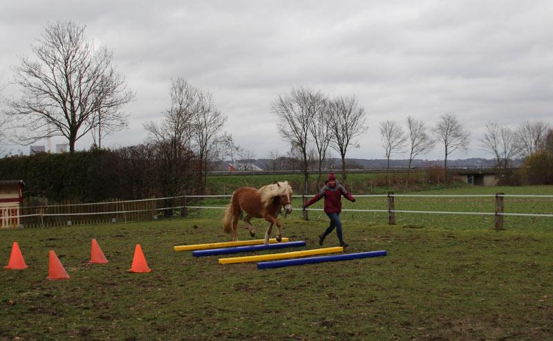Bodenarbeit Vertrauen Pferdeerziehung Fahrstall Goldbusch